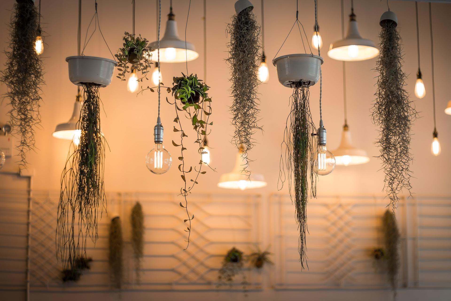 luchtzuiverende planten kopen